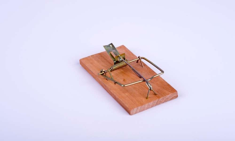 Baiting Mouse Traps – Increase your odds of Catching Mice