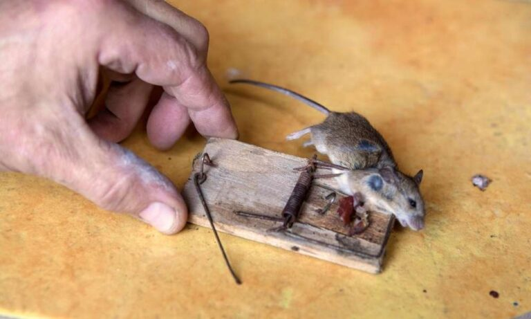 Electronic Victor Mouse Trap