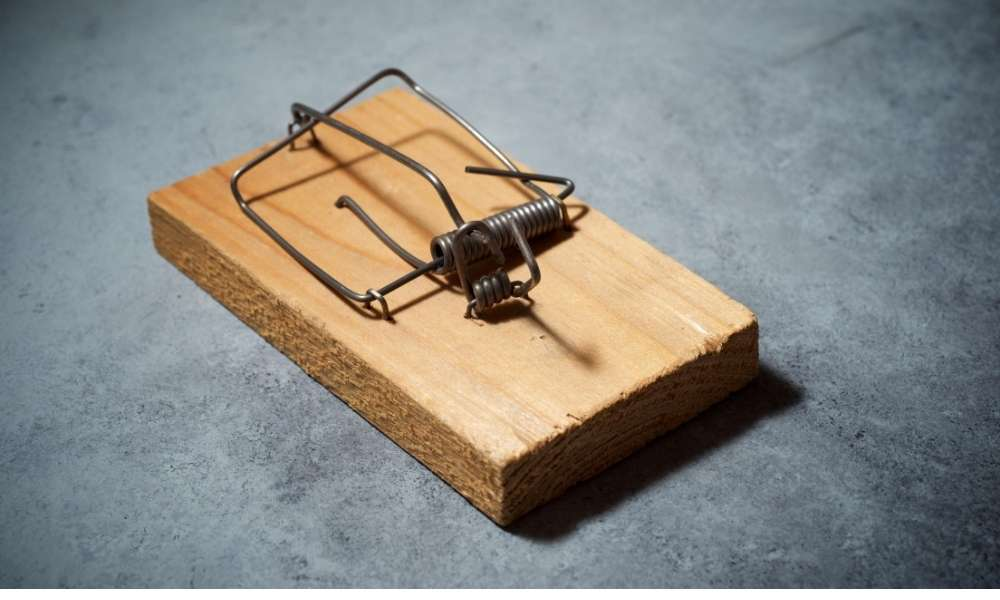 How to get the best mouse traps?
