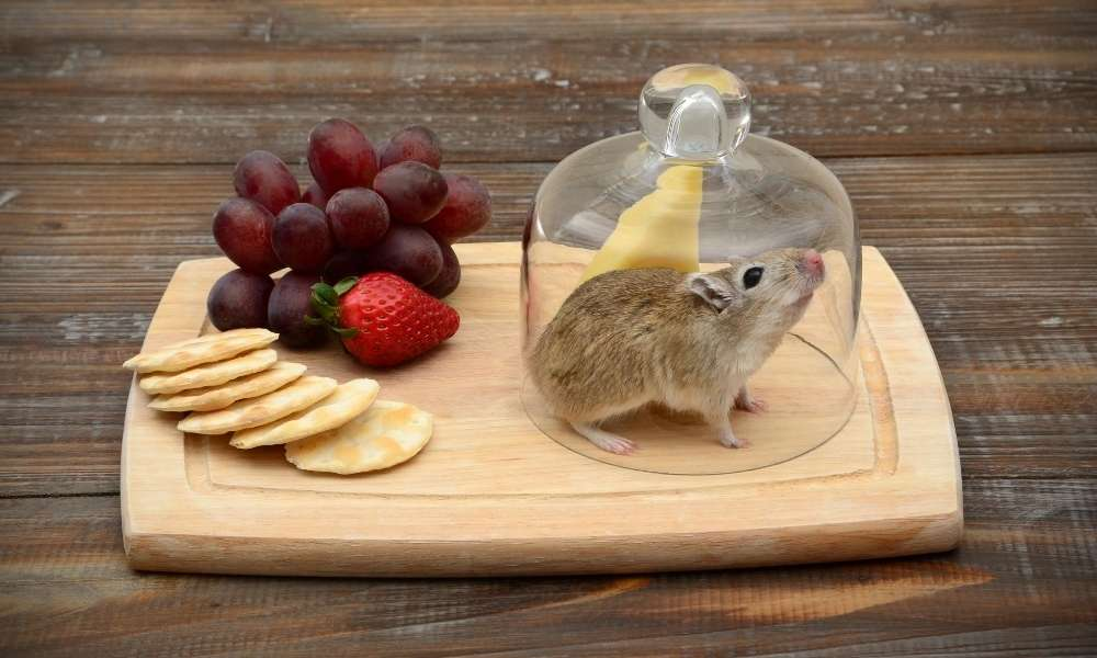 The best information about the practical use of mouse traps
